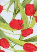 Tulipány červené 564/1